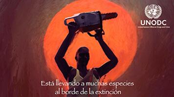 Spanish Subtitling UN